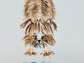 Always my Yorkie in dog illustrations although he's never chewed a slipper.