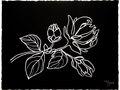 Black Floral n.2 - White gouache on black paper 16h x 21w in.