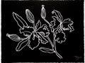 Black Floral n.1 - White gouache on black paper 16h x 21w in.