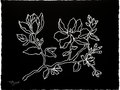 Black Floral n.4 - White gouache on black paper 16h x 21w in.